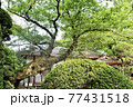 日本庭園 77431518