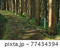龍門司坂と光差す「西郷隆盛 決意の杉」 77434394