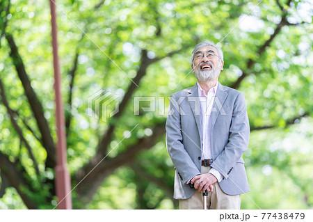 新緑の中たたずむシニア男性 高齢者 新緑 77438479
