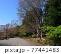 善福寺公園 77441483