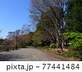 善福寺公園 77441484