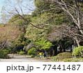 善福寺公園 77441487