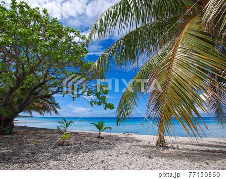 南国の離島の静かなラグーン (ランギロア環礁、ツアモツ諸島、仏領ポリネシア) 77450360