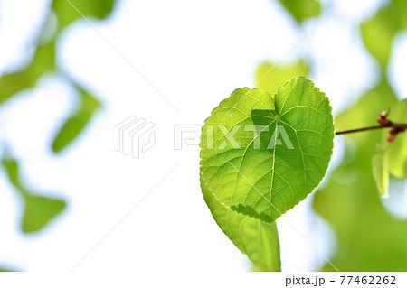 エコロジーイメージ 77462262