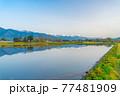 初夏の安曇野市の水田と水鏡 【長野県】 77481909