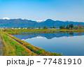初夏の安曇野市の水田と水鏡 【長野県】 77481910