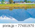 初夏の安曇野市の水田と水鏡 【長野県】 77481970