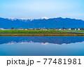 初夏の安曇野市の水田と水鏡 【長野県】 77481981