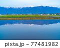 初夏の安曇野市の水田と水鏡 【長野県】 77481982