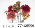 色とりどりのカーネーションの花 母の日 77486559