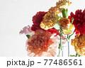 色とりどりのカーネーションの花 母の日 77486561