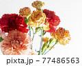 色とりどりのカーネーションの花 母の日 77486563