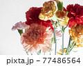 色とりどりのカーネーションの花 母の日 77486564