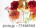 色とりどりのカーネーションの花 母の日 77486568