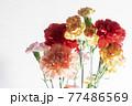 色とりどりのカーネーションの花 母の日 77486569