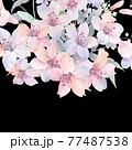 Beautiful elegant watercolor rose flower 77487538