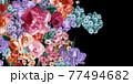 Beautiful elegant watercolor rose flower 77494682