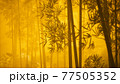 asian bamboo forest with morning fog 77505352