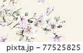 Beautiful elegant watercolor magnolia flower 77525825