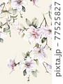 Beautiful elegant watercolor magnolia flower 77525827