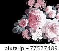 Beautiful elegant watercolor rose flower 77527489