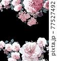 Beautiful elegant watercolor rose flower 77527492