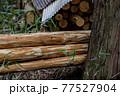 杉林の間伐 77527904