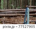 杉林の間伐 77527905
