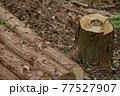 杉林の間伐 77527907