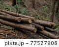 杉林の間伐 77527908