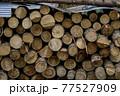 杉林の間伐 77527909