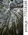 杉林イメージ 77528186