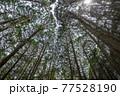 杉林イメージ 77528190