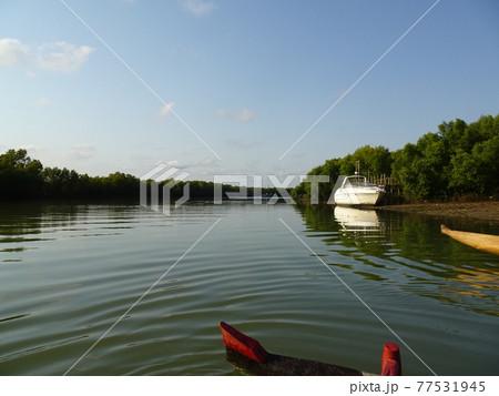 ベタニア村に向かうピローグの上からの川の景色(マダガスカル・モロンダバ) 77531945