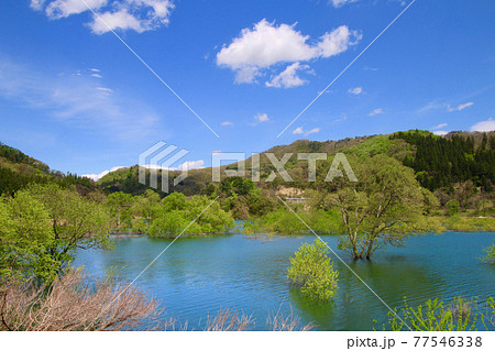 白川湖の水没林(山形県・飯豊町) 77546338