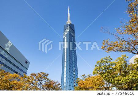 福岡県福岡市 快晴の福岡タワー 77546616
