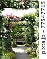 バラの花。アーチ。カラフルな花が横浜の港の見える丘公園に咲いています。 77547715