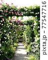 バラの花。アーチ。カラフルな花が横浜の港の見える丘公園に咲いています。 77547716
