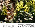 カラフルな花が横浜の港の見える丘公園に咲いています。 77547720