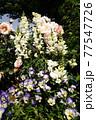 白い花。カラフルな花が横浜の港の見える丘公園に咲いています。 77547726