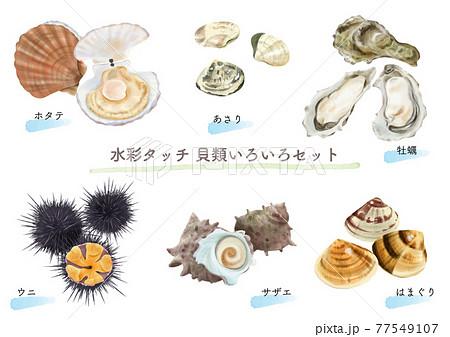 水彩タッチの食用貝類セット   77549107