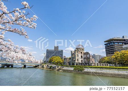 広島県広島市 満開の桜と原爆ドーム 77552157