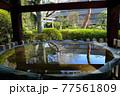 東京都文京区 護国寺 手水舎の水面に映る染井吉野 77561809