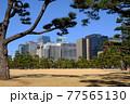 皇居の松林と高層ビル群 77565130
