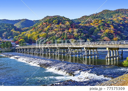 秋の嵐山、渡月橋 77575309