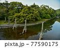 伊勢神宮の神秘的な風景 77590175