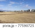 田舎の風景 冬の田んぼ 77590725