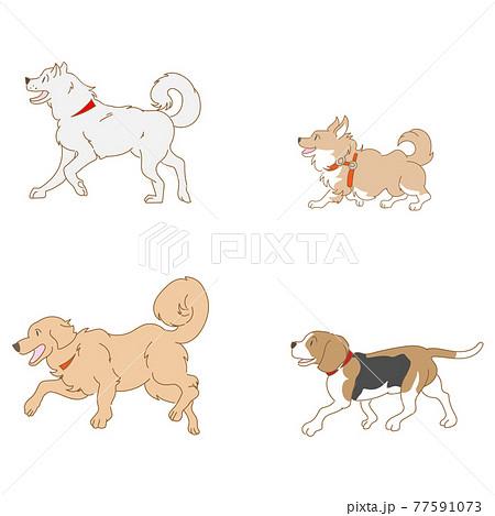 犬4種類のベクターセット 77591073