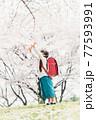 桜と手を振る小学生 77593991
