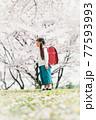 桜と小学校新一年生 77593993